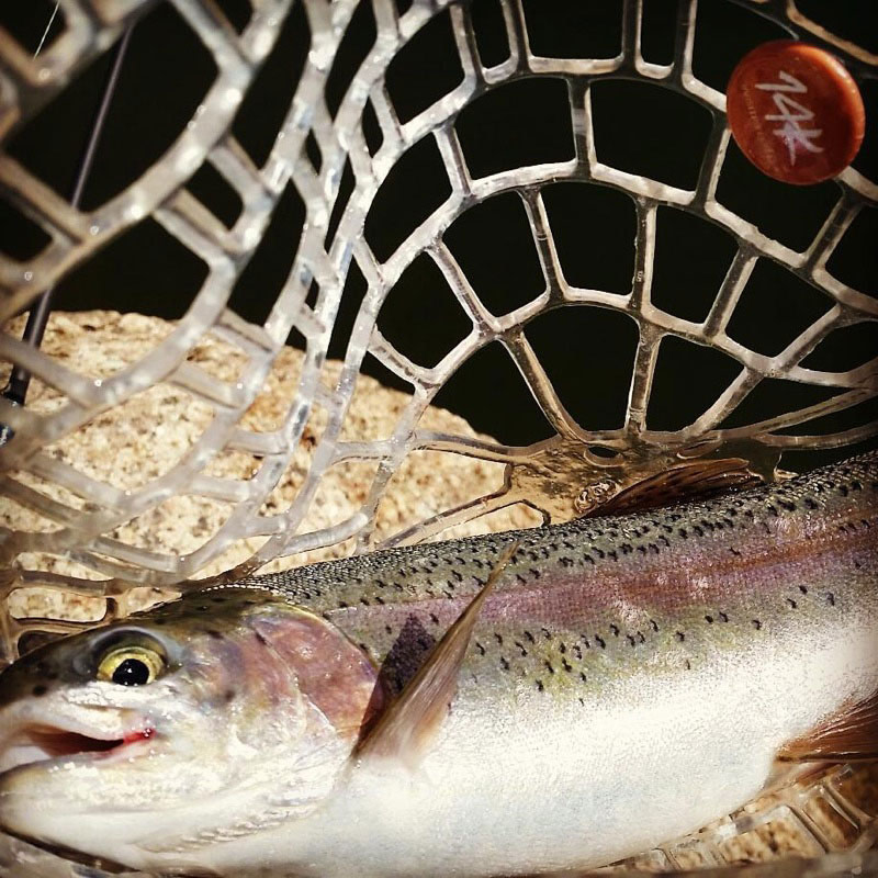 Trout-on-Pikes-Peak