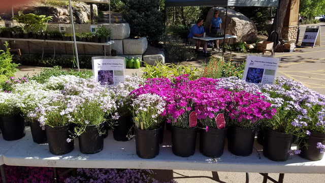 cheyenne mountain zoo plant sale flowers