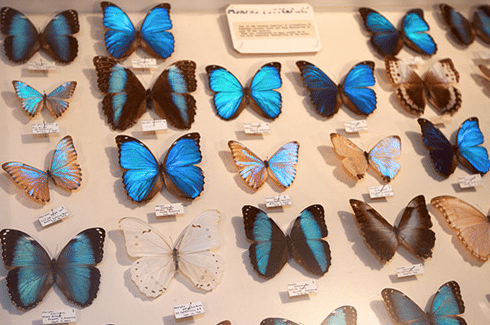 Visit the May Natural History Museum before September