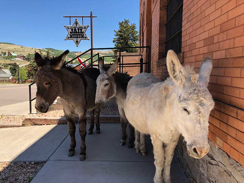 Cripple Creek Donkey in front of Jail Museum