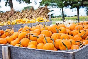Pumpkin Patches in Colorado Springs