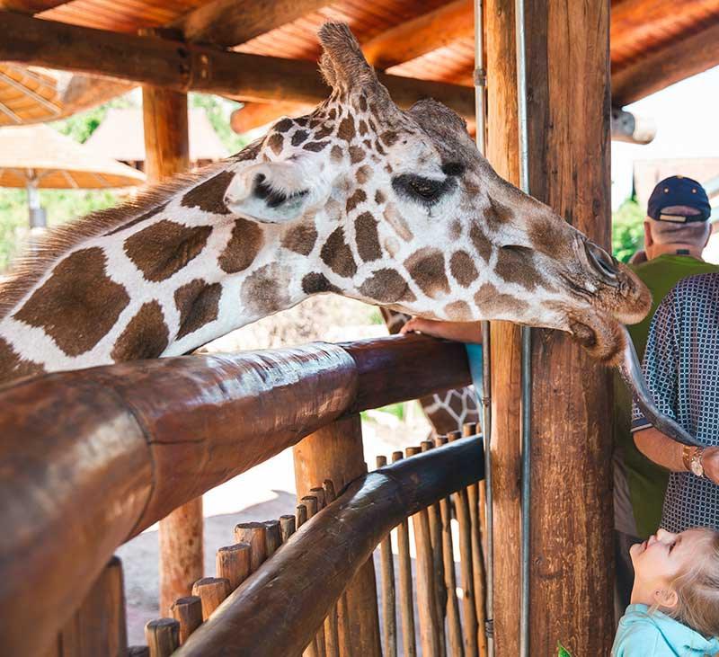 Cheyenne Mountain zoo open on Thanksgiving