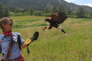 broadmoor outfitters falconry
