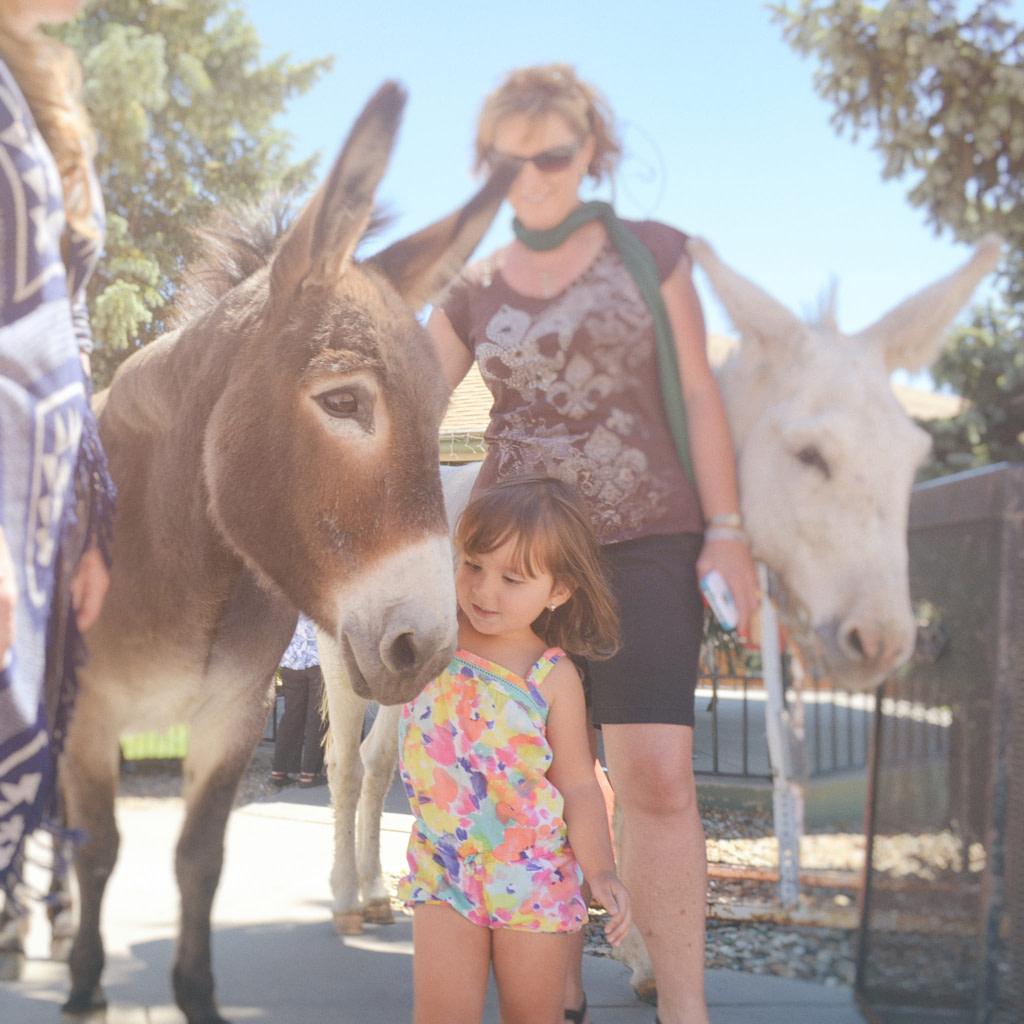 Donkey&Kids Cripple Creek